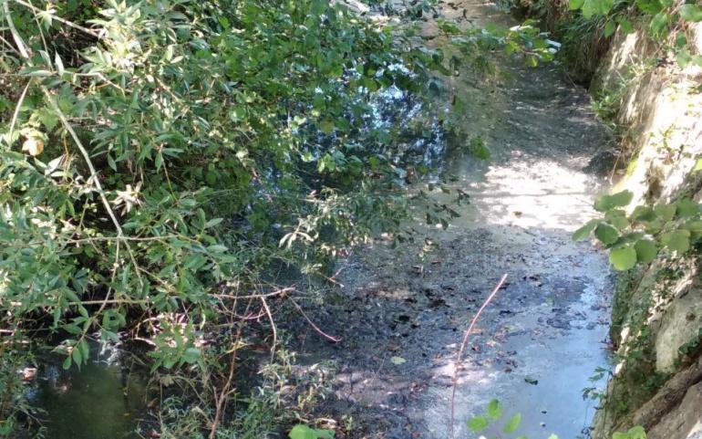 Conegliano – Denuncia alla procura inquinamento fiume Monticano.